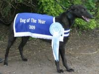 Want a Share in DROOPYS LEONARD? - last post by gazzam